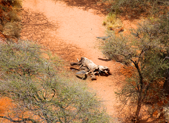 An Aerial View of an Elephant Carcass