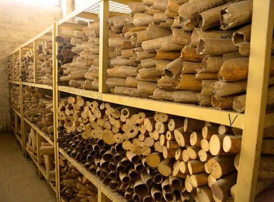 Stockpiles Of Seized Ivory