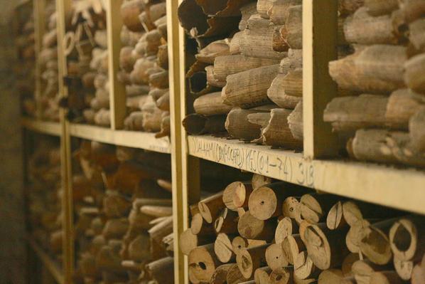 Shelves of Seized Tusks