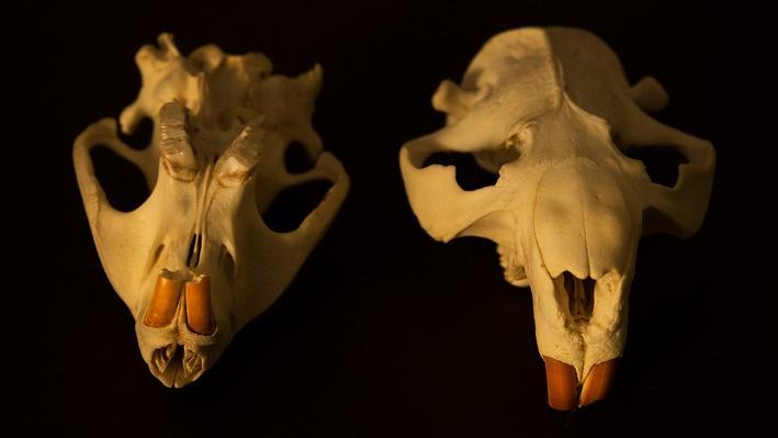Platte Basin Timelapse 10: Beaver Skull