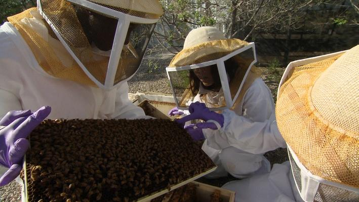 Bee Haven: Research