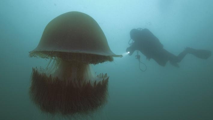 Nomura's Jellyfish | Big Pacific: Voracious