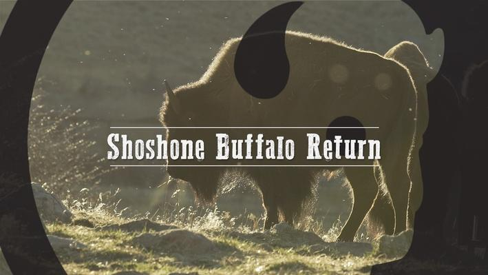 Shoshone  Buffalo Return video