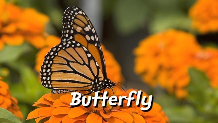 Butterfly Life Cycle Fitness