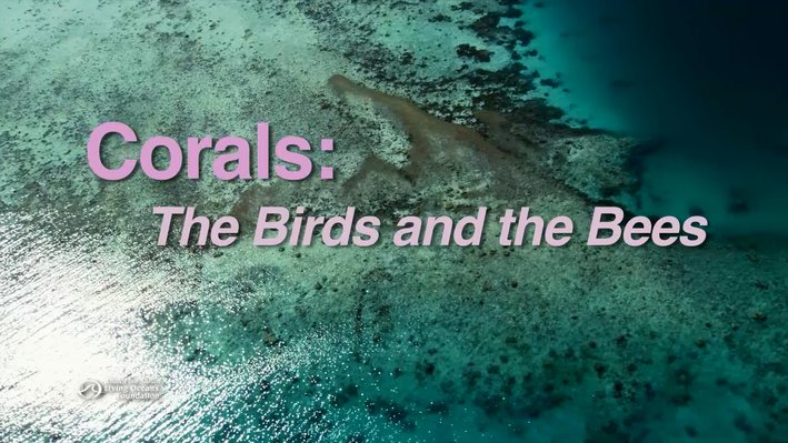 Corals: The Birds and the Bees