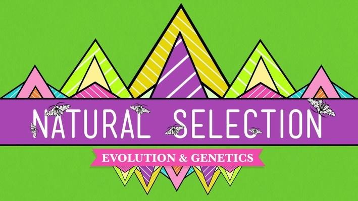 Natural Selection | Crash Course Biology