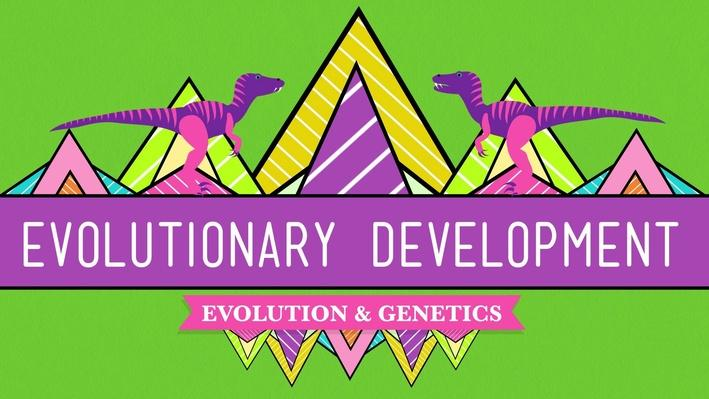 Evolutionary Development: Chicken Teeth | Crash Course Biology