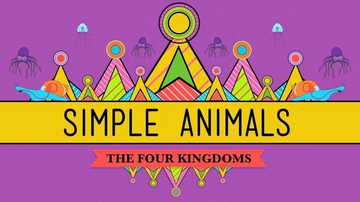 Simple Animals: Sponges, Jellies, & Octopuses | Crash Course Biology