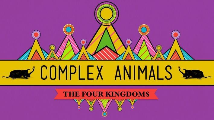Complex Animals: Annelids & Arthropods | Crash Course Biology