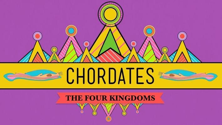 Chordates | Crash Course Biology