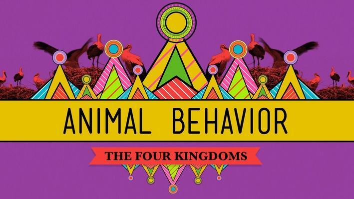 Animal Behavior | Crash Course Biology