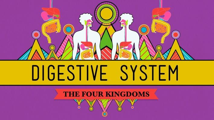 The Digestive System | Crash Course Biology