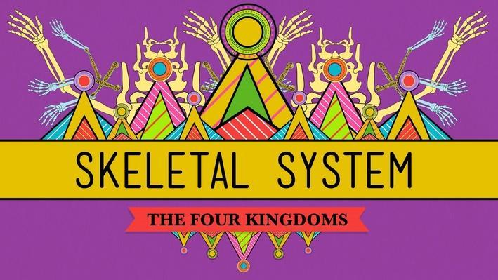 The Skeletal System: It's ALIVE! | Crash Course Biology