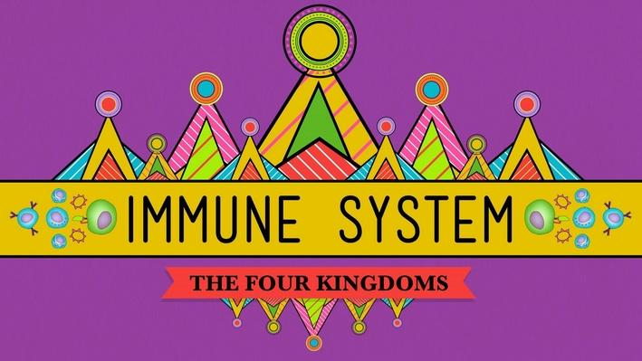 Your Immune System: Natural Born Killer   Crash Course Biology