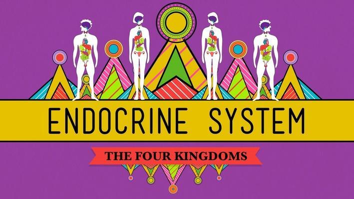 Great Glands | Your Endocrine System: Crash Course Biology