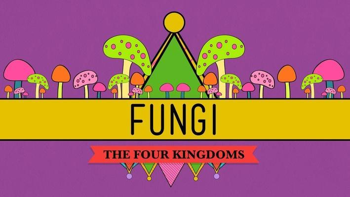 Fungi: Death Becomes Them | Crash Course Biology