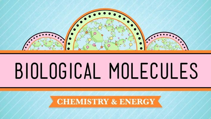 Biological Molecules - You Are What You Eat | Crash Course Biology