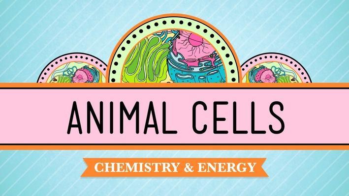 Eukaryopolis: The City of Animal Cells | Crash Course Biology