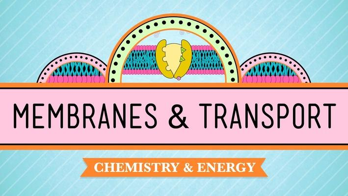 In Da Club: Membranes & Transport | Crash Course Biology