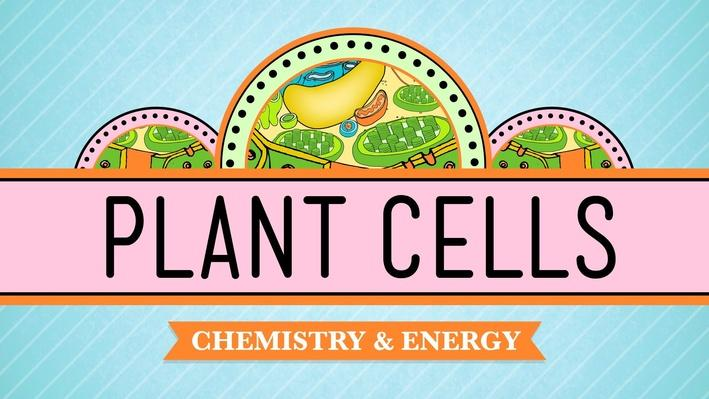 Plant Cells | Crash Course Biology