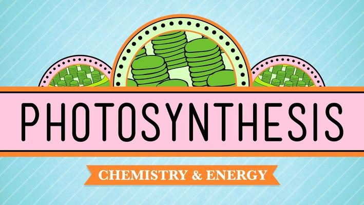 Photosynthesis | Crash Course Biology