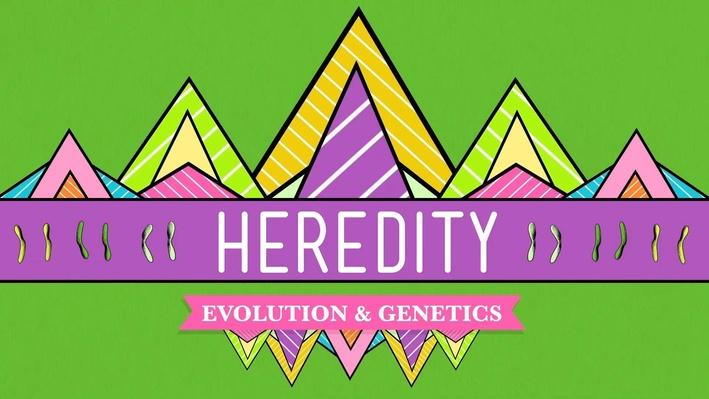 Heredity | Crash Course Biology