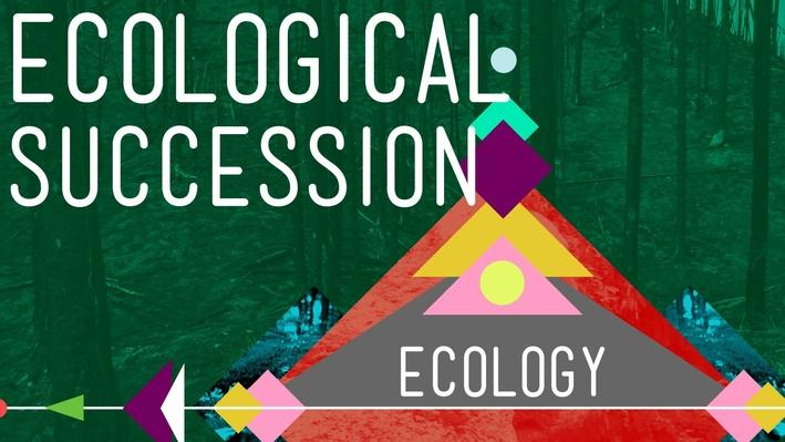 Ecological Succession: Change is Good | Crash Course Ecology