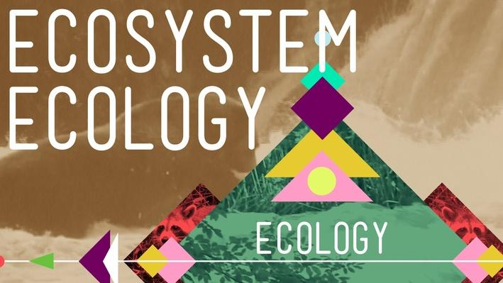 Ecosystem Ecology: Links in the Chain | Crash Course Ecology