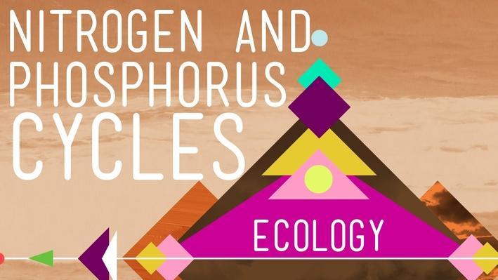 Nitrogen & Phosphorus Cycles: Always Recycle! Part 2 | Crash Course Ecology