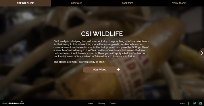 CSI Wildlife