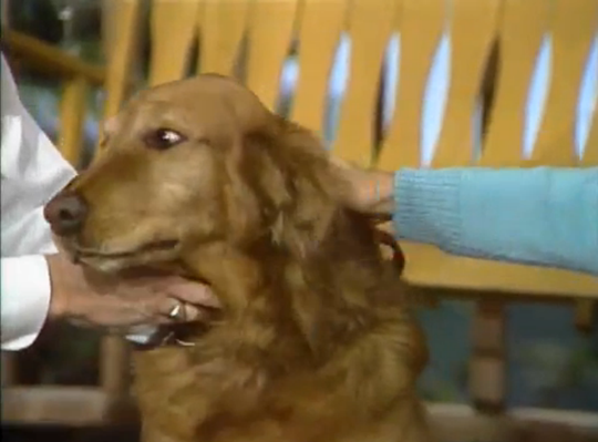 Talking about Pets | Mister Rogers' Neighborhood