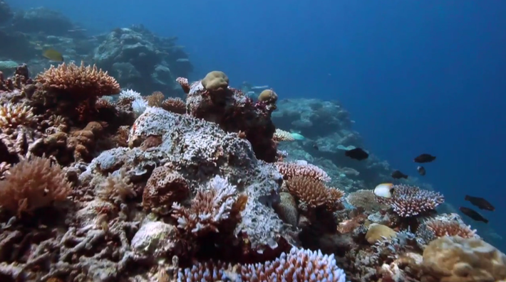 Coral Reefs: Feeding and Protecting Us: Video | Nature Works Everywhere
