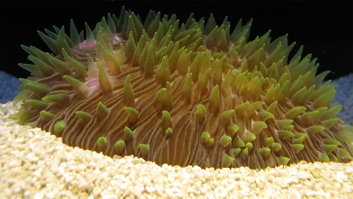 Lens of Time: Corals in Motion