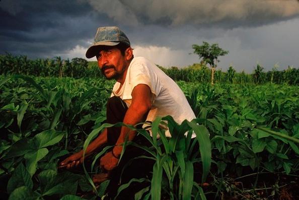 Corn Farming Near Mayan Ruins