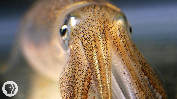 You're Not Hallucinating. That's Just Squid Skin | Deep Look