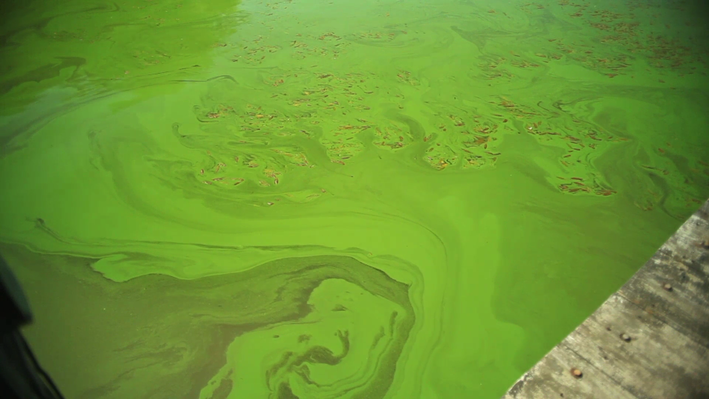 Algae Blooms Affect Great Lakes Drinking Water