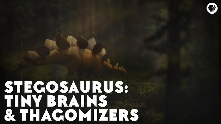 Stegosaurs: Tiny Brains & Thagomizers | Eons