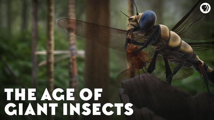 The Age of Giant Insects | Eons