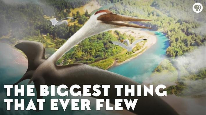 The Biggest Thing That Ever Flew | Eons