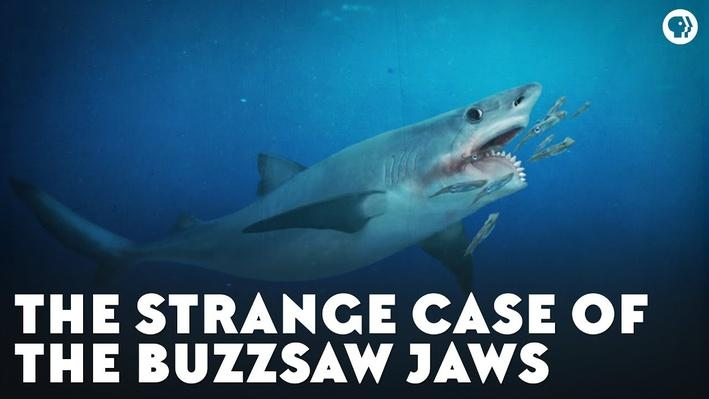The Strange Case of the Buzzsaw Jaws | Eons