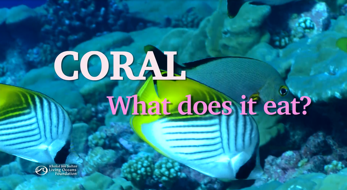 Coral: What Does it Eat?