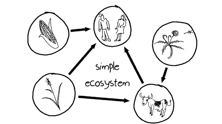 Ecosystem Services | Biodiversity Course