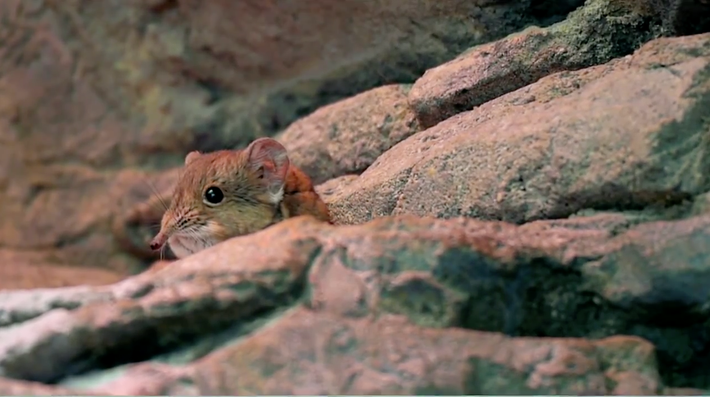 Elephant Shrew | Songs for Unusual Creatures | PBS Digital Studios