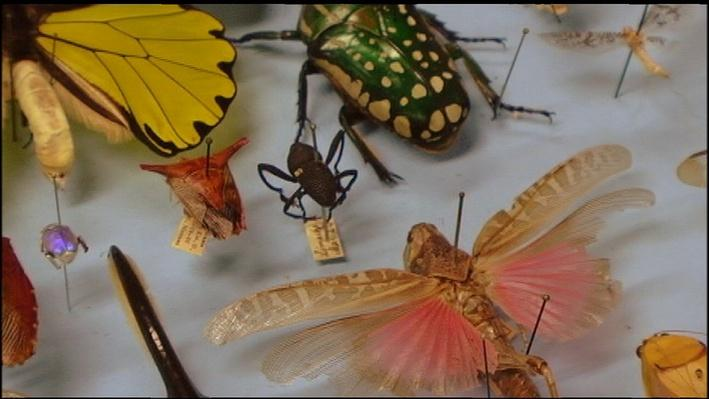Indiana Expeditions | Entomology at Purdue