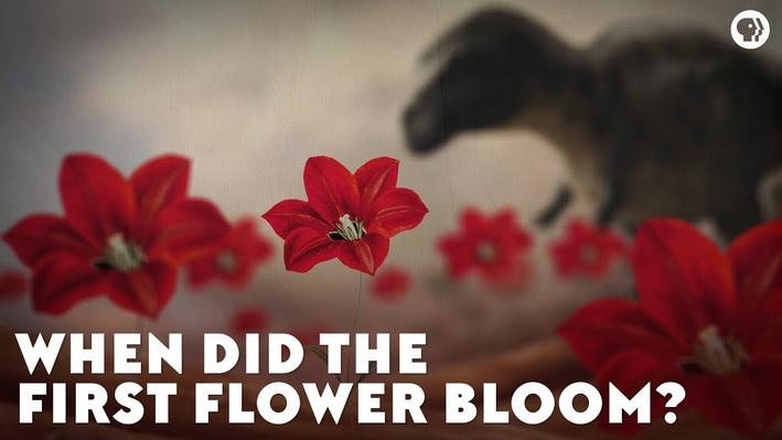 When Did the First Flower Bloom? | Eons