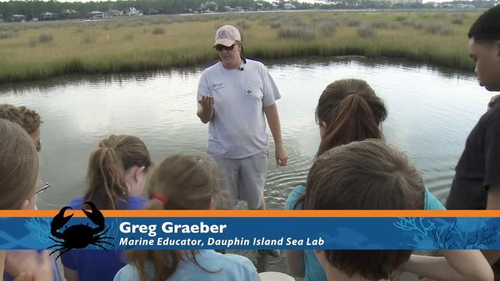 Clip 2: Exploring the Salt Marsh