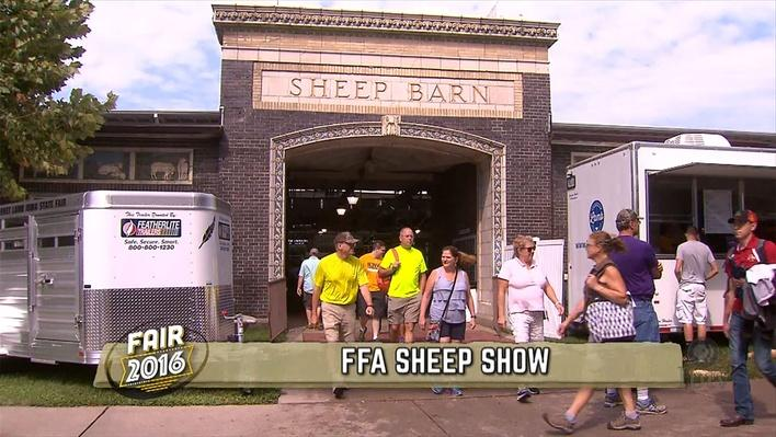image of the sheep barn at the Iowa State Fair