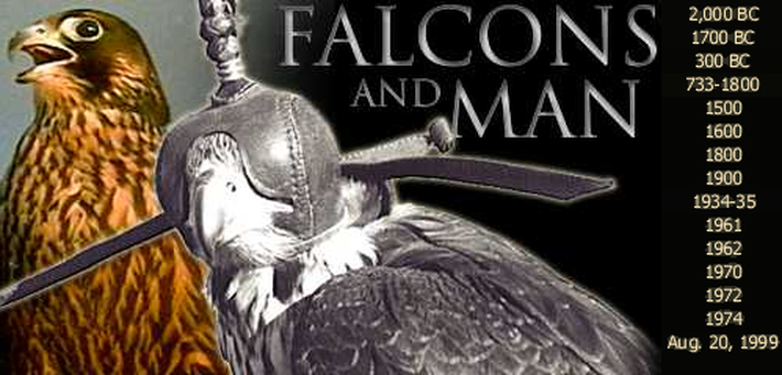 Timeline | A Falconer's Memoir