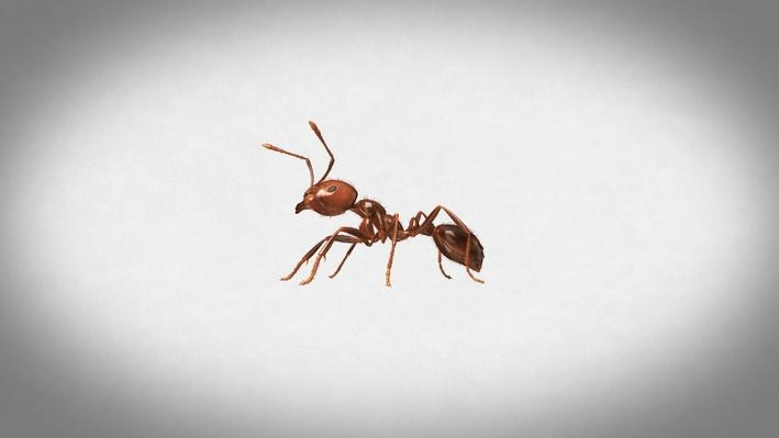 Inside the World of Fire Ants! | It's Okay to Be Smart