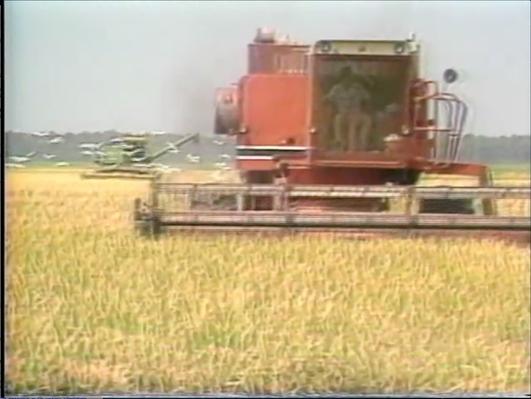 Georgia Stories: Georgia's Major Export - Rice